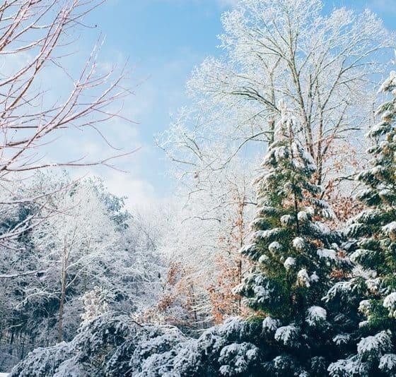 Snow Cork