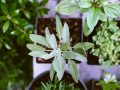 This quick course will show you the secrets of successful small space gardening