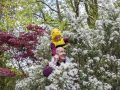 A new Bee Pollinator Trail is almost ready for visitors at Fota House and Gardens