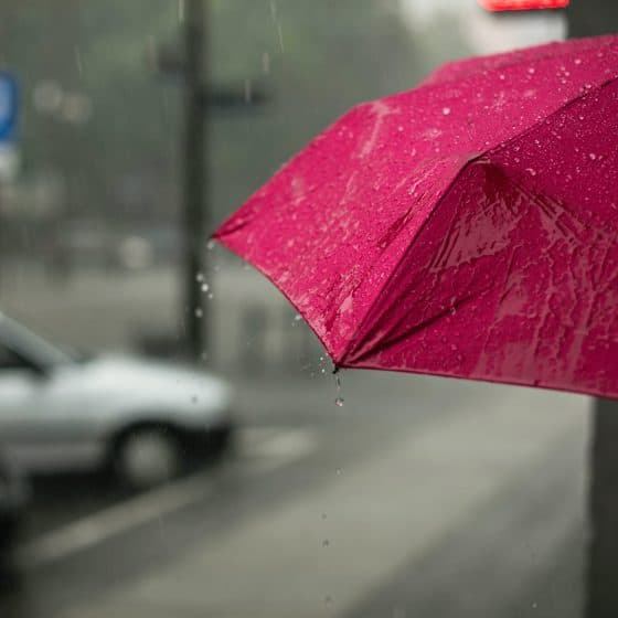 Rain Cork