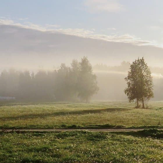 Fog Cork